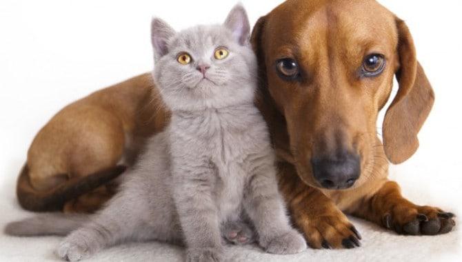 How long will indoor cat live