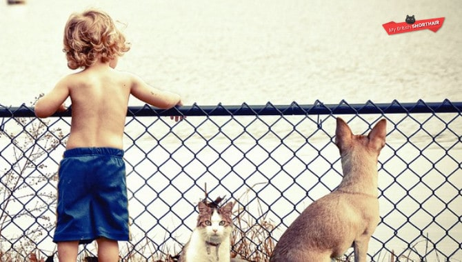 British-Shorthair-vs-Chartreux-cat-kids-dog