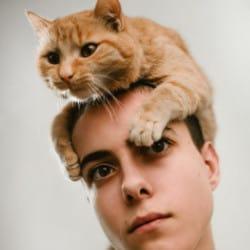 British-shorthair-cat-character