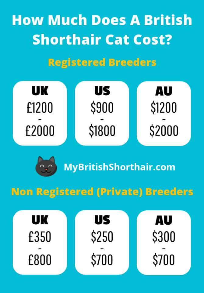How Much Does A British Shorthair Cat Cost