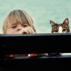 baby cat allergy british shorthair