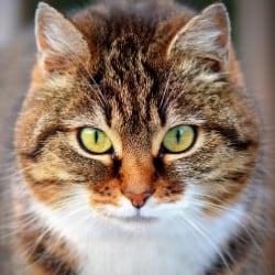 pure-bred pedigree cats