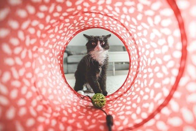 cat toy photo