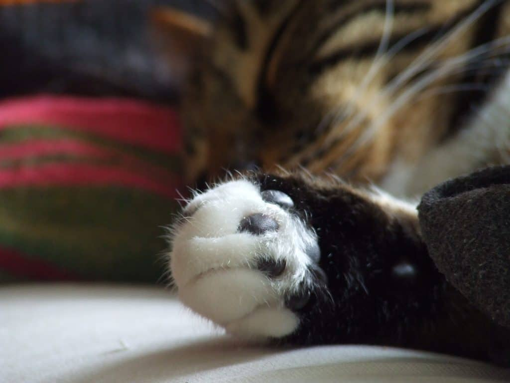 Cat_paw_depth_of_field