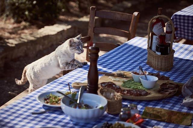 cat eating photo