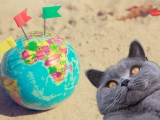 How To Travel With British Shorthair Cats - Complete Guide