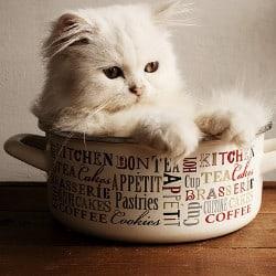 british shorthair kitten food