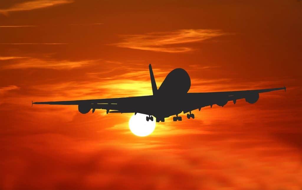 british shorthair plane travel