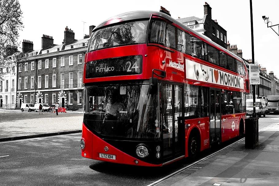 bus travel cat
