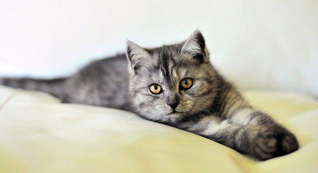 cat dog photo