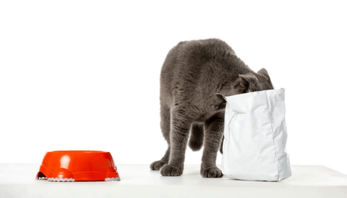 How Many Pouches Should I Feed My Cat My British Shorthair
